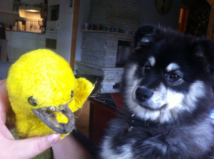 Louhi and the broken duck.