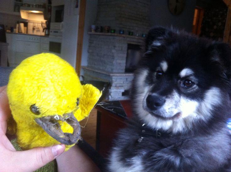Louhi and the broken duck.