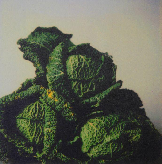 サイ・トゥオンブリー『キャベツ』1998 年 個人蔵 カラードライプリント、厚紙 個人蔵 ©Nicola Del Roscio Foundation…