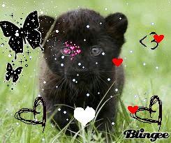 cucciolo di pantera nera