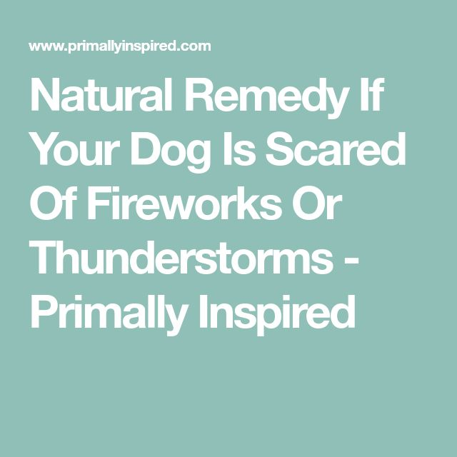 Natural Remedy If Your Dog Is Scared Of Fireworks Or Thunderstorms - Primally Inspired