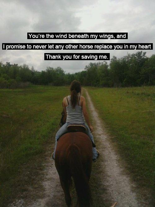 Stella 3, My Heart, Trail Riding, Horses Deserve, Special Places, Red Clovers, Lessons Horses