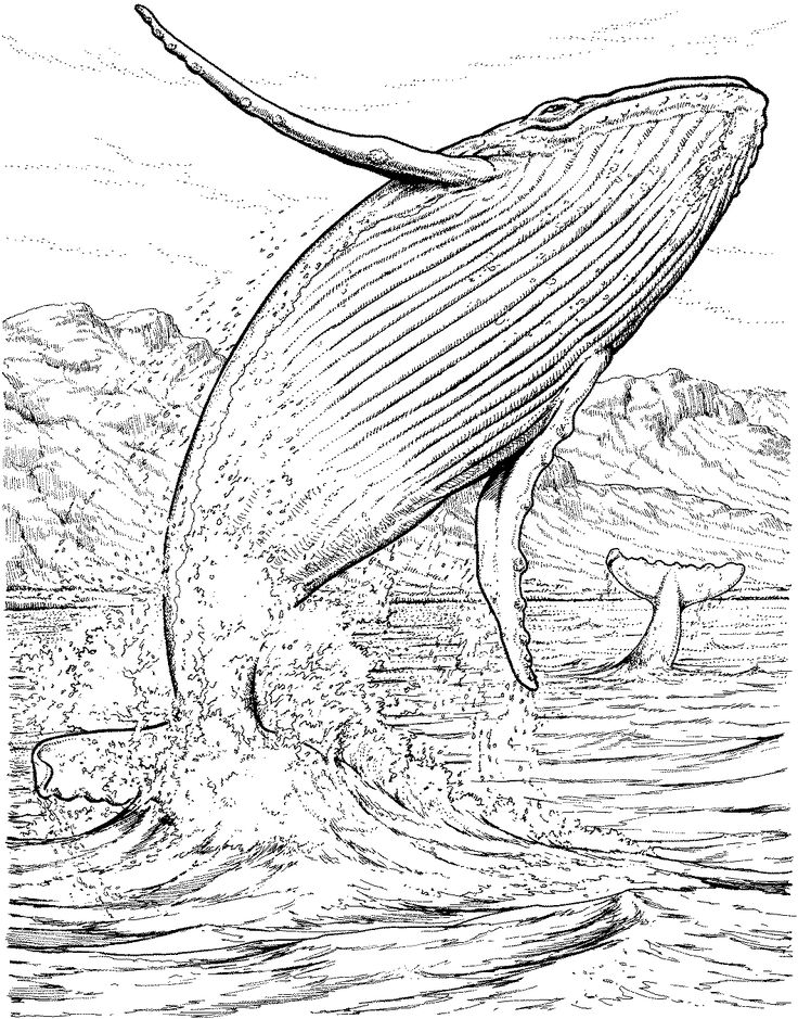 Coloring Pages Of Aquatic Animals : 13 best images about marine animals on pinterest