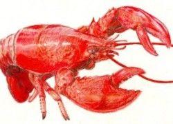 Freshwater Lobster Aquaponics