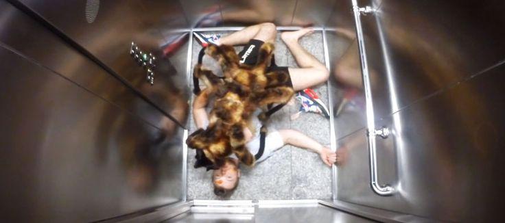 La vidéo la plus drôle que j'ai vu! Caméra cachée : un chien déguisé en araignée géante effraye les passants