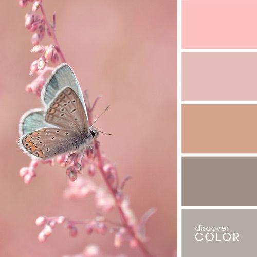 Нежный мотылек | DiscoverColor.ru