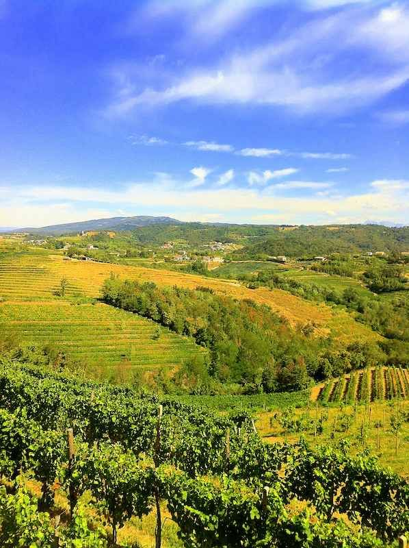 Collio, Trieste, Vineyards, Friuli, Venezia Giulia region of Italy