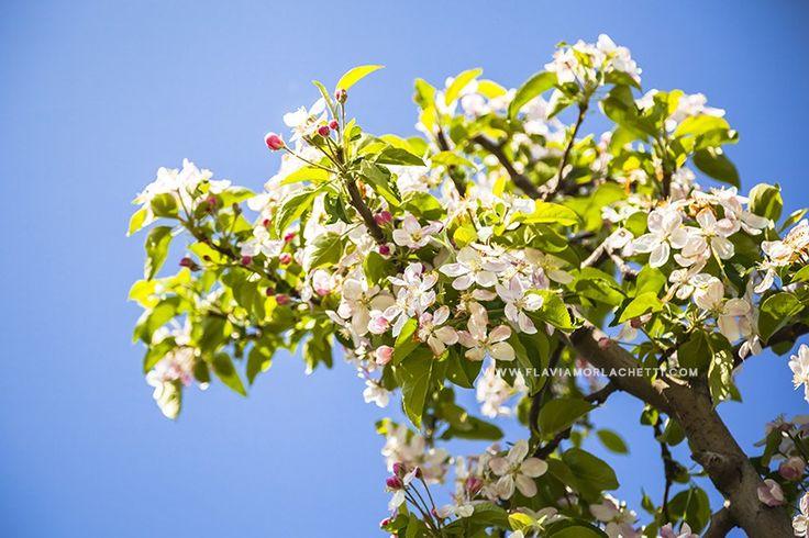 Piantagioni di mele « Flavia Morlachetti Photography