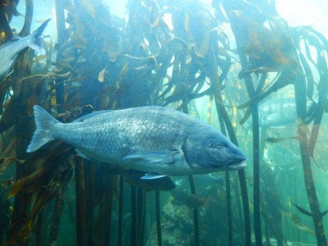 Conheça o Aquário Two Oceans em Cape Town em África do Sul. Espécies dos oceanos atlântico e indico, um verdadeiro safari aquático.