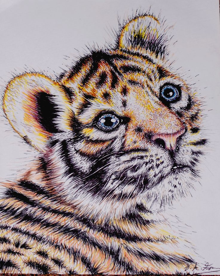This is a drawing I did of a tiger using felt tip pens. Drawn by Sarah Fenn