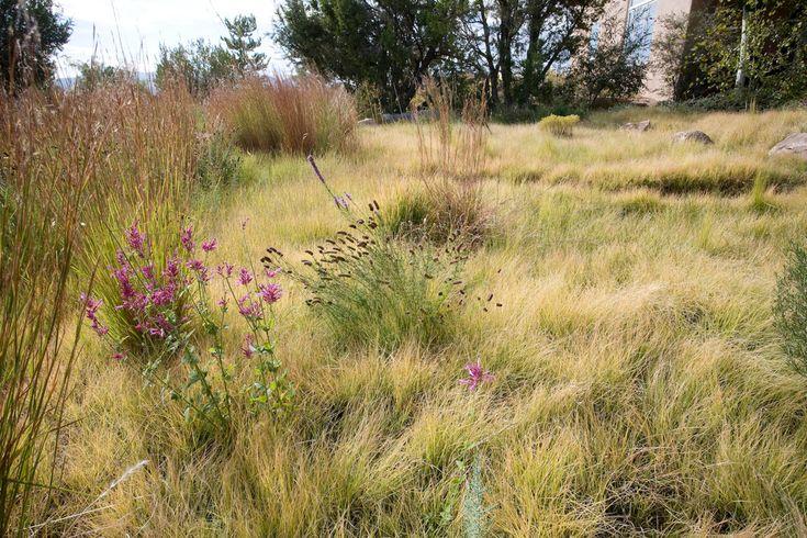 102 best design vertical accent succulents images on for Short grasses for landscaping