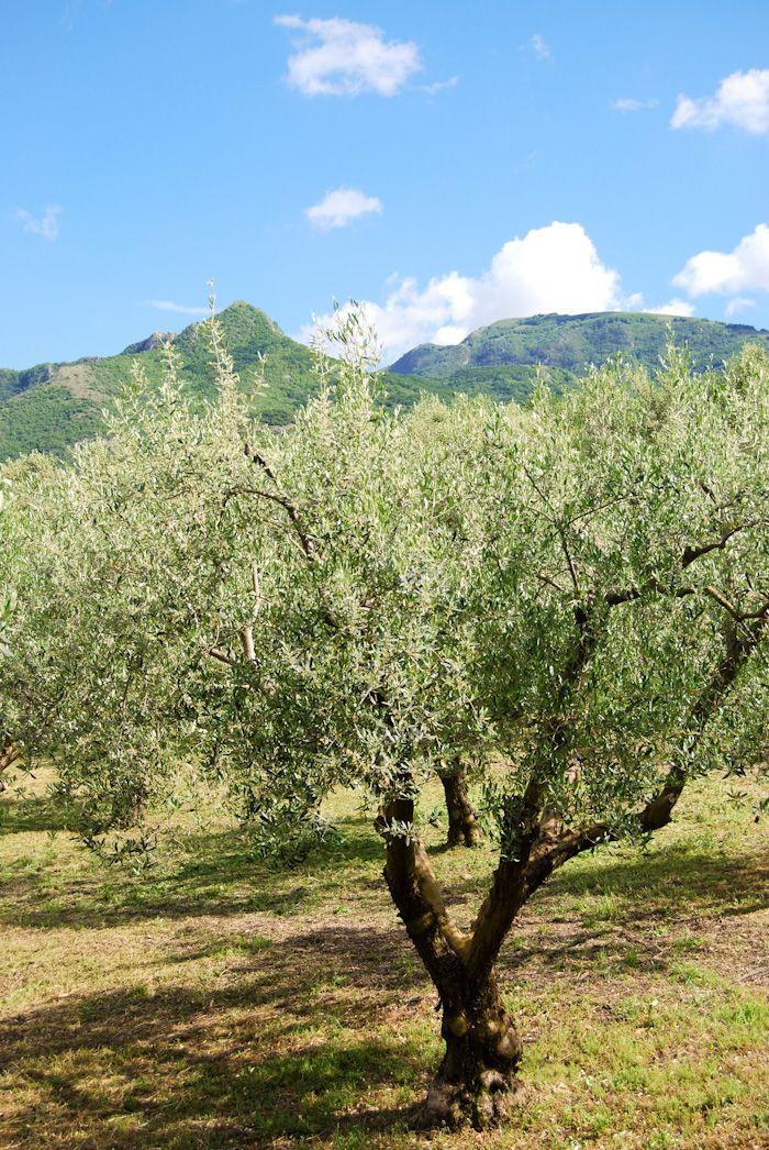 Summertime at Efthimiadi Estate  www.elirisgreece.com