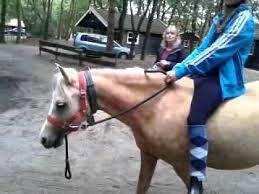 Afbeeldingsresultaat voor ponyparkcity tomas
