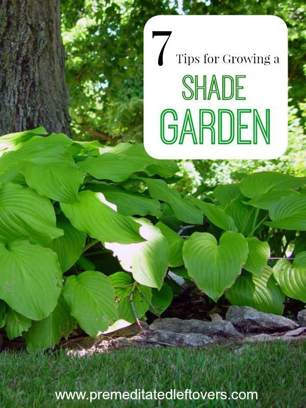 7 Tips for Growing a Shade Garden- If you have a shady yard, don't despair! These tips can help you grow lush and beautiful plants that thrive without sun. Gardening tips for growing flowers and plants in a shady spot in your yard.