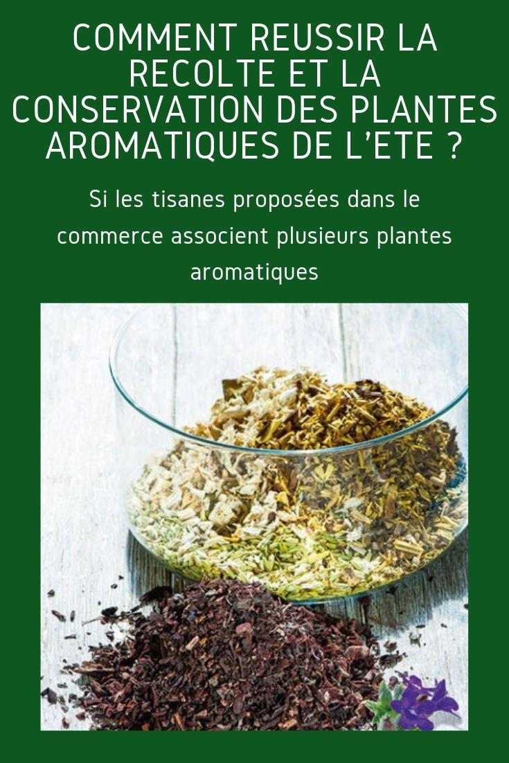 Comment récolter et conserver les plantes aromatiques de l