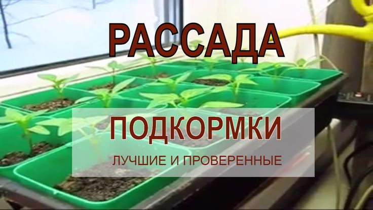 ☭ ЛУЧШИЕ ПОДКОРМКИ ДЛЯ РАССАДЫ томатов, перцев, баклажан и пр. / Огор...