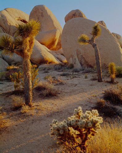 Mojave Desert California