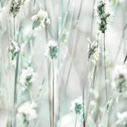Sommerset dekor- öntapadós fólia (45 cm x 15 m)
