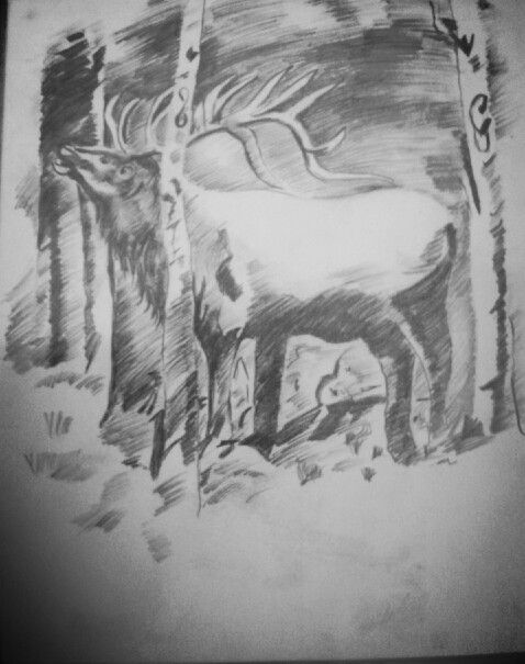 Pencil sketching# stag#