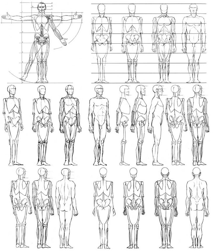 tutoriales, modela tus esculturas anathomy skeletal perspective angles front view side back lightly side