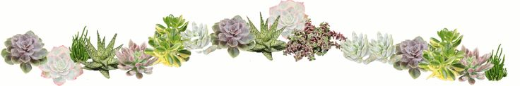 """JadePoint Succulents """"Pointing Gardeners in an Easier Direction"""" by shipping a huge variety of succulents and easy care plants to your door!  Per Paula Hayes"""
