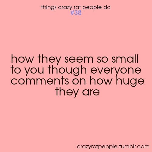 Things crazy rat people do: [#38] How they seem so small to you though everyone comments on how huge they are