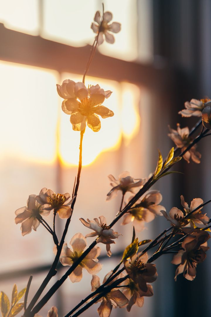 I like the perspective of this photo, with the sun streaming in through the window in the background. -Lily