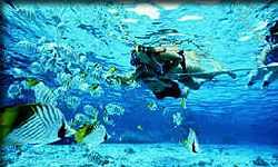 Snorkeling the Key West Reef: $35 morning, $40 afternoon or Sunset. 3hrs, 2 stops, free beer/water