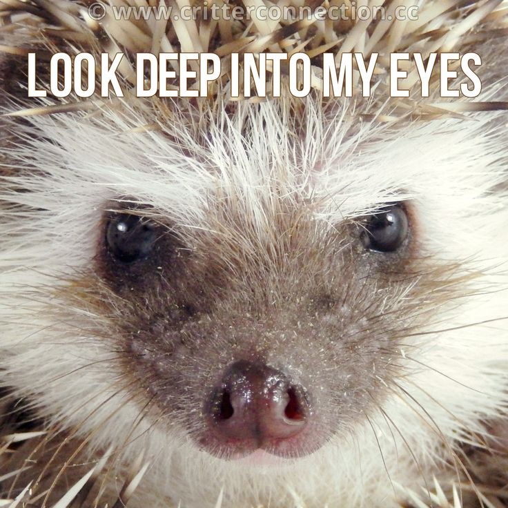 Wolf Look Into My Eyes Quotes Daily Inspiration Quotes