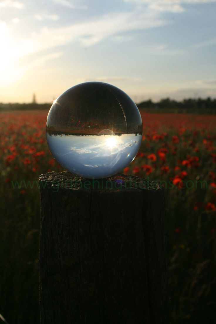 """Time to Reflect"", Poppy field in South Cambridgeshire UK Summer 2015. Check out www.girlbehindthelens.com"