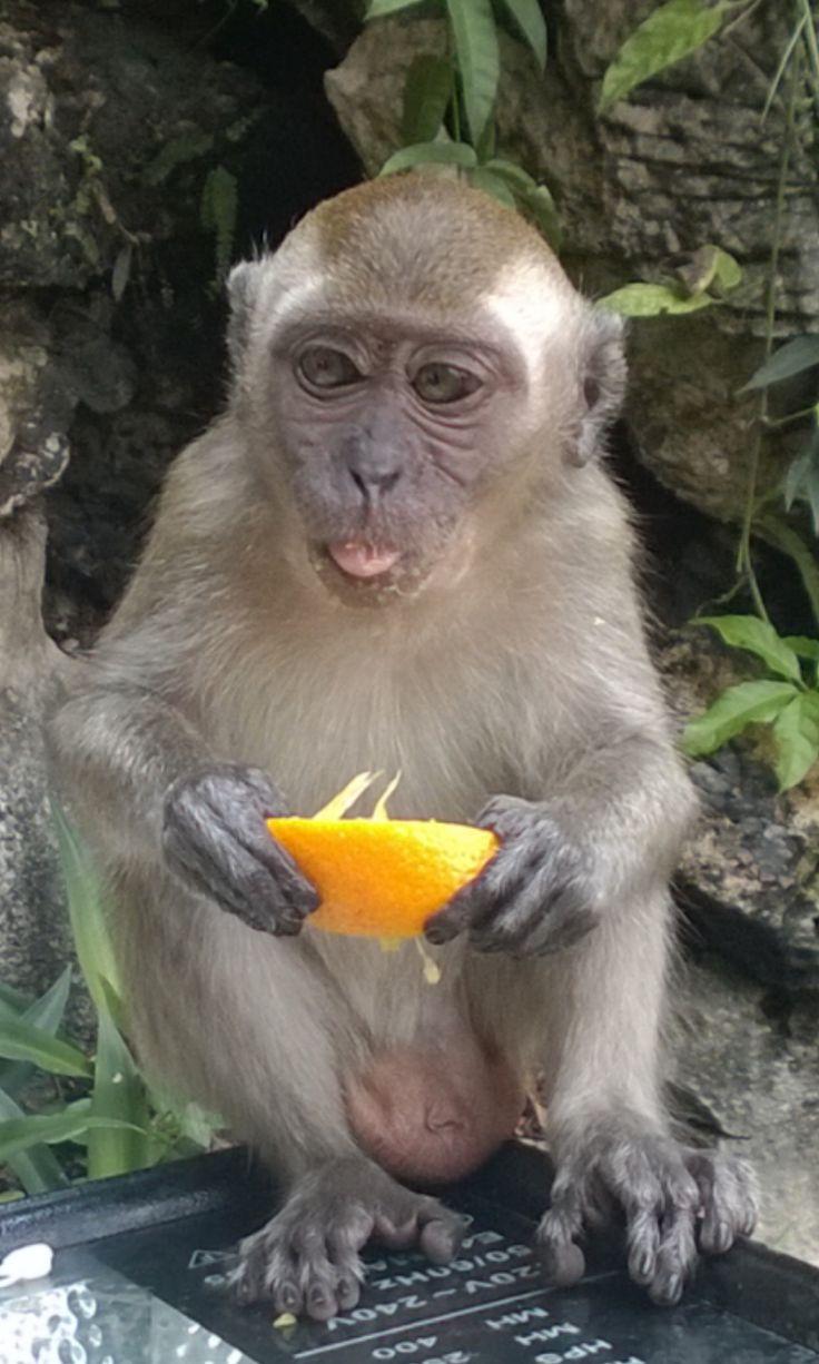 http://apenmatkat.blogspot.fi/p/kuala-lumpur.html
