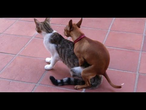 Dog and Cat getting it on WTF