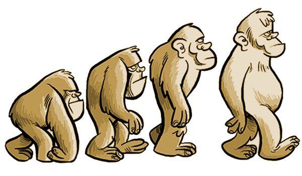 Los Premios Darwin http://algarabia.com/ciencia/los-premios-darwin/