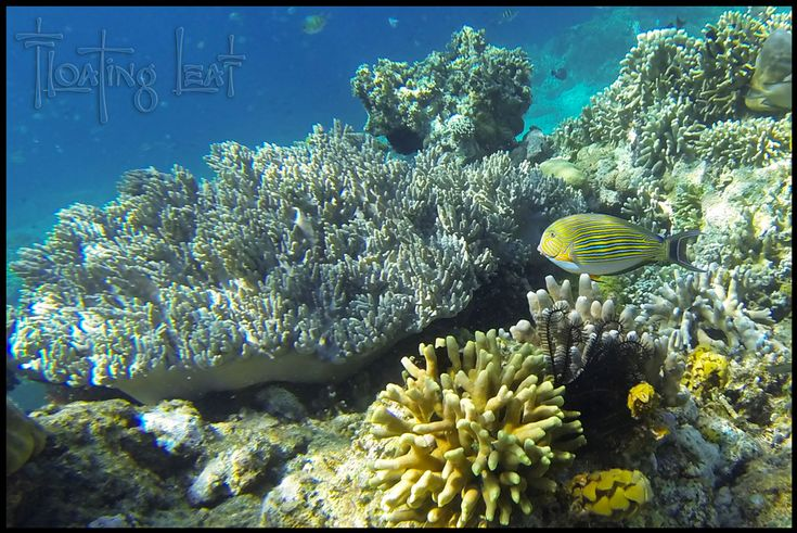 Scuba diving in #Bali #Photo of the Day~ Scuba Diving in Bali & why its so good http://balifloatingleaf.com/bali-photo-scuba-snorkel/ #Travel
