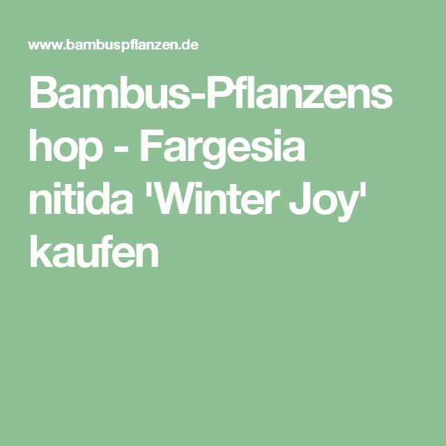 Bambus-Pflanzenshop - Fargesia nitida 'Winter Joy' kaufen