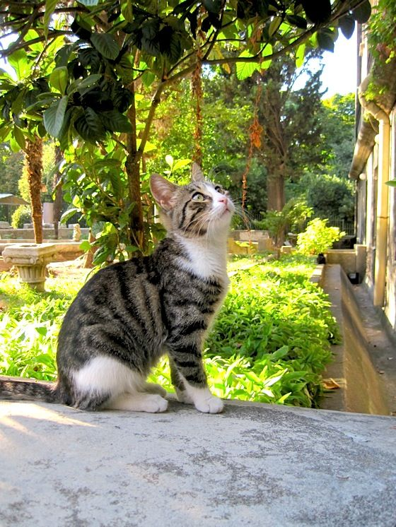 """Cute cat in Istanbul ....""""Istanbul, ho-hum, just another stamp in my passport."""""""