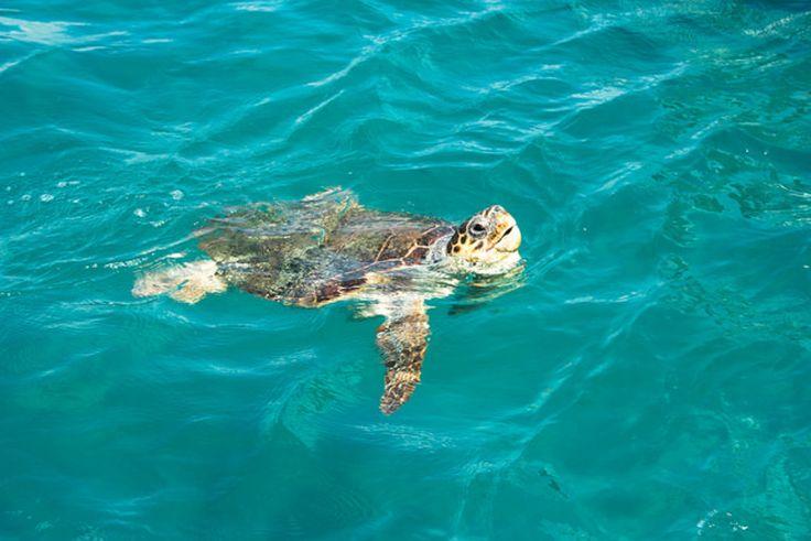 Прекрасная Лампедуза: Пляж Кроликов, шикарная природа и много моря – Италия…