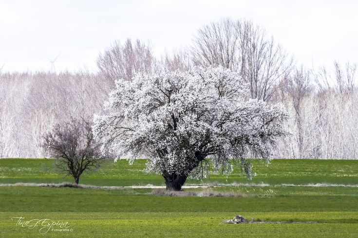 https://flic.kr/p/HvLtaQ   La primavera deja atrás el invierno.   El invierno está en mi cabeza, pero la eterna primavera está en mi corazón.  Víctor Hugo