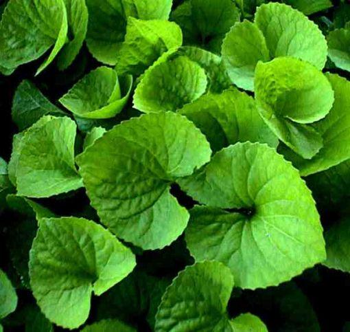 Green%20Leaves(http://jameswoodward.wordpress.com 2013)