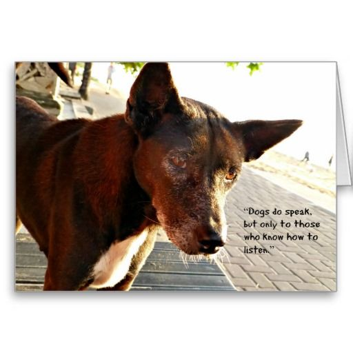 Sympathy Dog Quotes: 11 Best Pet Sympathy Cards Images On Pinterest