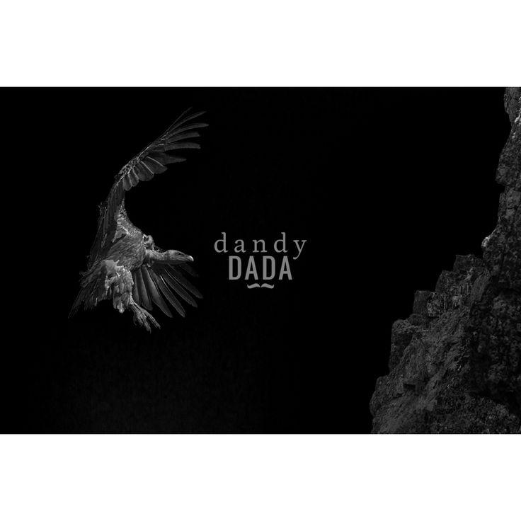 Fotografia avvoltoio della collezione Black and Wild di Angelo Andreoni