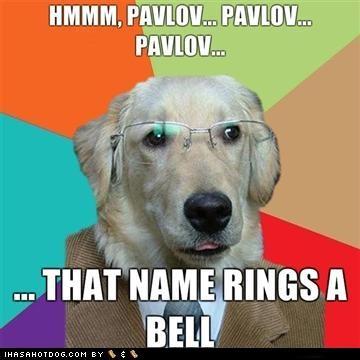 Psychology humor: Psychology Jokes, Nerd Jokes, Psych Major, Psych Jokes, Dogs Memes, Psychology Major, Funny Stuff, Psychology Humor, Psych Humor