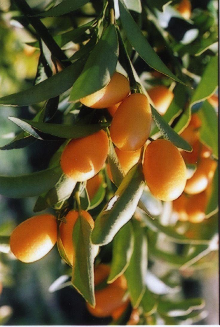 Greek Flora.