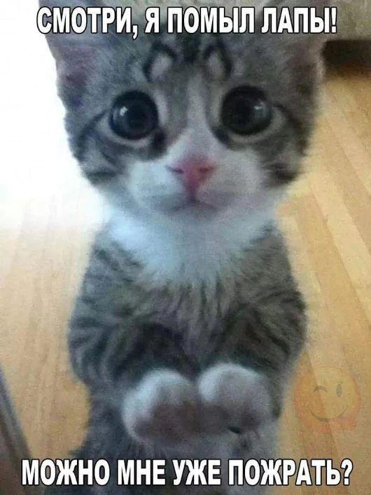 Юмор котёнок голодный. - Супер Милана классная !!!! - Google+