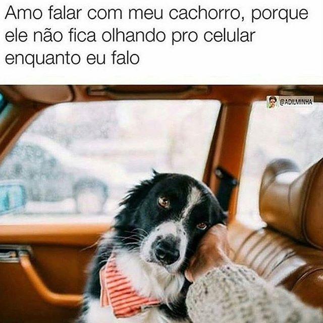 ❤#cachorroétudodebom #petmeupet #