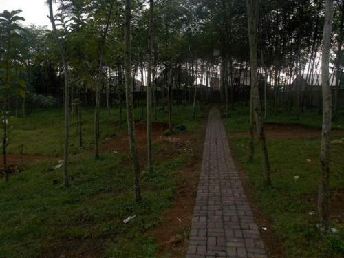 dijual tanah parung panjang bogor parung panjang, parung panjang Parung Panjang » Bogor » Jawa Barat