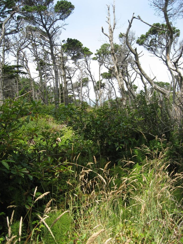 9 Best Mendocino Coast Botanical Gardens Images On Pinterest Mendocino Coast Botanical