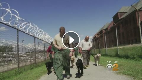 Prison Dogs: Puppies Behind Bars: CBS2's Jessica Moore reports.