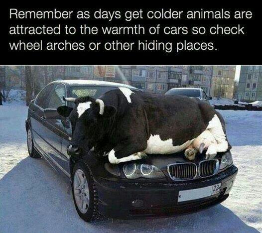 Bavarian motor works divine for the bovine.