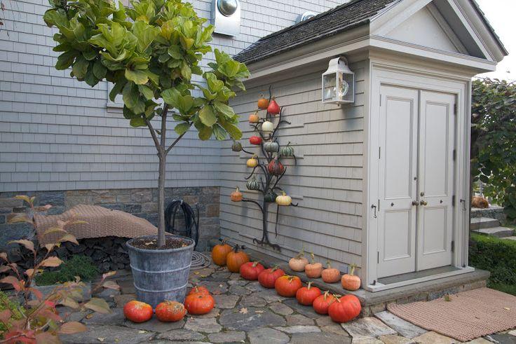 Pumpkins, gourds and curcurbits via The Official Martha Stewart Blog - The Martha Blog